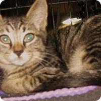 Adopt A Pet :: Tigger - Dallas, TX