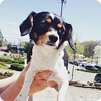 Adopt A Pet :: MATILDA - Pompton lakes, NJ