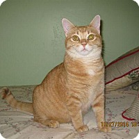 Adopt A Pet :: Suzie - La Jolla, CA