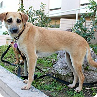 Adopt A Pet :: Dulce - from Costa Rica - Los Angeles, CA