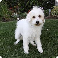 Adopt A Pet :: ABILENE - Newport Beach, CA