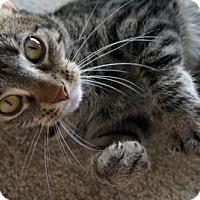 Adopt A Pet :: Monarch - Savannah, GA