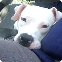 Adopt A Pet :: Robinson - Villa Park, IL