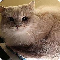 Adopt A Pet :: SAM FKA SAVANNAH - Powder Springs, GA