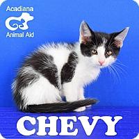 Adopt A Pet :: Chevy - Carencro, LA