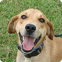 Adopt A Pet :: Roland - Erwin, TN