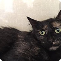 Adopt A Pet :: Topaz - Fort Collins, CO