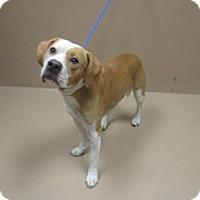 Adopt A Pet :: Rockey - Reno, NV