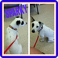 Adopt A Pet :: Sparky - Fort Collins, CO