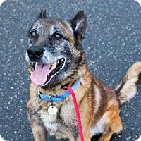 Adopt A Pet :: *MAG - Upper Marlboro, MD