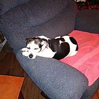Adopt A Pet :: Maggie - courtesy - Cincinnati, OH