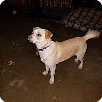 Adopt A Pet :: Max - Arlington/Ft Worth, TX