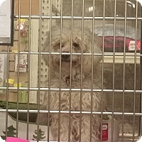 Adopt A Pet :: Sandy - Palmdale, CA