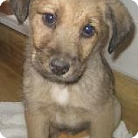 Adopt A Pet :: Fiji**ADOPTED!** - Chicago, IL