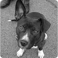 Adopt A Pet :: Katie Brown - Brattleboro, VT