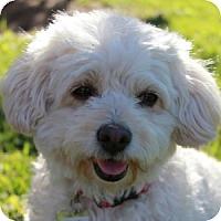 Adopt A Pet :: Maisie - La Costa, CA