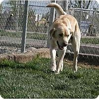Adopt A Pet :: Sandy - Meridian, ID