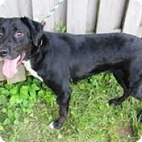 Adopt A Pet :: Hans - Lewisville, IN