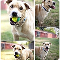 Adopt A Pet :: Hoosier - South Park, PA