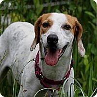 Adopt A Pet :: Dottie - Sarasota, FL