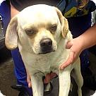 Adopt A Pet :: ollis