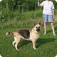 Adopt A Pet :: BRIE - Tully, NY