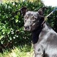 Adopt A Pet :: Fruitcake - Newnan, GA