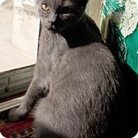 Adopt A Pet :: Aptis - North Highlands, CA