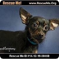 Adopt A Pet :: Marie - Phoenix, AZ
