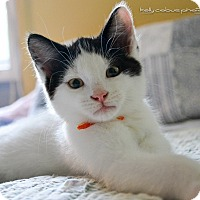 Adopt A Pet :: Pip - Douglas, ON