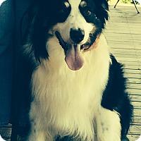 Adopt A Pet :: Bear - Hazard, KY