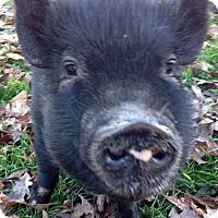 Adopt A Pet :: Sophie - Jasper, TN