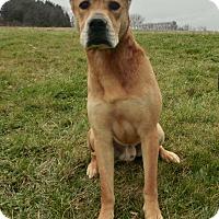 Adopt A Pet :: ARTAX - New Cumberland, WV