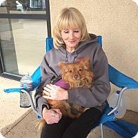 Adopt A Pet :: Master - Las Vegas, NV