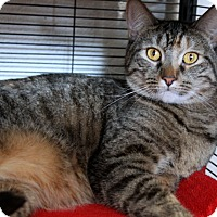 Adopt A Pet :: Chelsea - Sarasota, FL