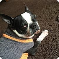 Adopt A Pet :: Rosco - San Francisco, CA