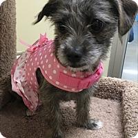 Adopt A Pet :: Penelope - Las Vegas, NV