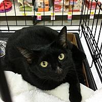 Adopt A Pet :: Scarlet - Temecula, CA