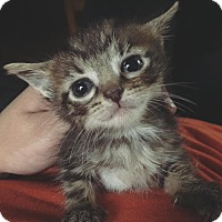 Adopt A Pet :: Muenster - Silver Lake, WI