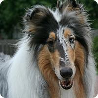 Adopt A Pet :: Daegann - Mission, KS