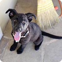 Adopt A Pet :: Dasha Polanco - Brooklyn, NY