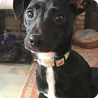 Adopt A Pet :: Kenya - Staten Island, NY