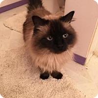 Adopt A Pet :: Sena - Wasilla, AK