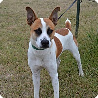 Terrier (Unknown Type, Medium) Mix Dog for adoption in Larned, Kansas - Bandit