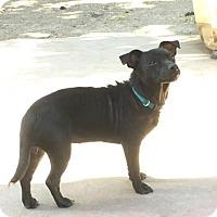 Adopt A Pet :: Ellie - Lodi, CA