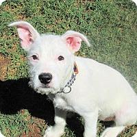 Adopt A Pet :: Blanca - Williston Park, NY