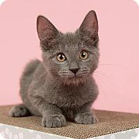 Adopt A Pet :: BLT - Wilmington, DE