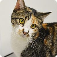 Adopt A Pet :: Gilda - Springfield, IL