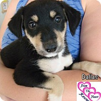 Adopt A Pet :: Dallas - Canutillo, TX