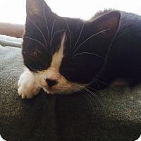 Adopt A Pet :: Miss Fifi - Toronto, ON